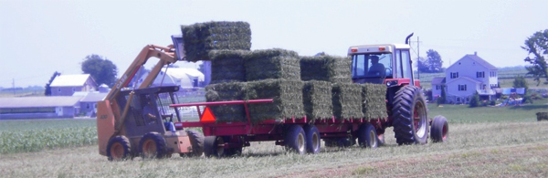 alfalfa with high relative feed value at harvest
