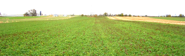 alalfa field treated with extracted compost tea