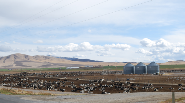 Webb Basin Dairy