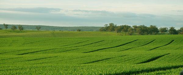 soi fertilty key to healthy crops